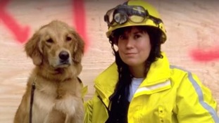 Last known 9/11 rescue dog dies aged 16