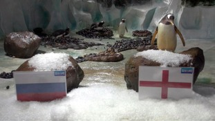 Birmingham Sea Life's Pablo the penguin predicts triumph for England squad at Euro 2016