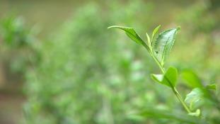Simon's Blog - Grow Your Own...