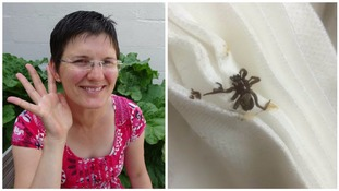 A spider crawled into this woman's ear while she swam in the sea...