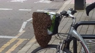 The bees in Peterborough swarming around a bike.