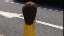 The swarm of bees settled on a post outside Chadwell Heath Health Centre