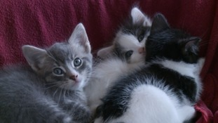Cat rehoming charity says it's facing a kitten crisis