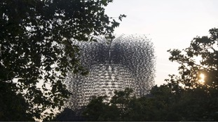 British bee comes to Kew in 56 foot sculpture 'The Hive'.