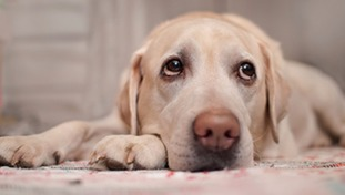 Fresh warnings to dog owners after Alabama Rot outbreak