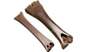 Medieval ice skates.
