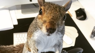 Hundreds sign petition to stop 'much-loved' Cyril the Squirrel from being exterminated by pest controllers