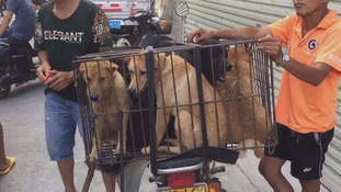 The dogs bound for brutal and bloody deaths at China's 'dog meat festival'