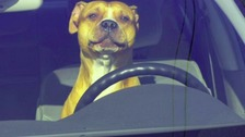 The RSPCA say dogs must not be left in cars in the hot weather.