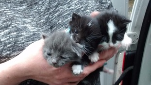 Kittens rescued after being dumped in abandoned freezer in Sunderland