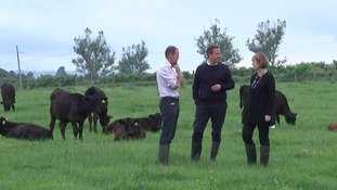 David Cameron on farm