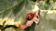 Ladybird weather