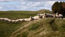 Politicians need to work together to support farmers