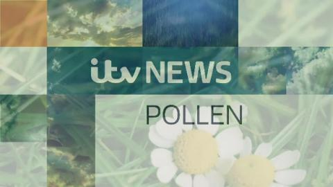 Pollen_Lunch