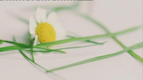 web_prog_pollen_saturday
