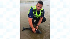 Baby 'dolphin' washed up at Blackpool