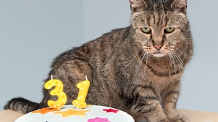 Meet Nutmeg - the world's oldest cat at 31