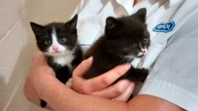 Two kittens tied in plastic bag found dumped in bin