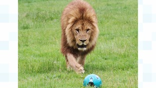 Three Lions play football in support of three lions ahead of England v. Iceland