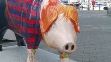 Pigs Gone Wild sculpture trail set to be summer hit in Ipswich