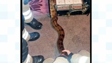 S...s...s...slippery call-out for firefighters as boa constrictor gets into tight squeeze