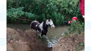 RSPCA Inspector rescues pony from Cambridgeshire stream