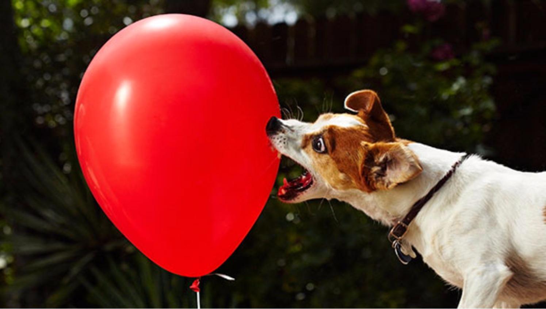 meet 100 animals by balloon books