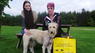 Dog rehomed after being dumped and tied to tree with broken leg
