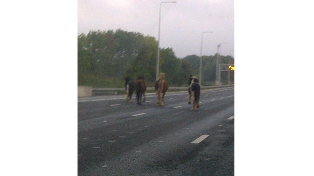 Four horses on the M25.