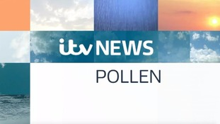 Friday evening's Pollen Count