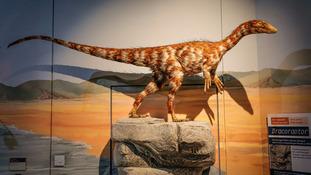 Model of Dracoraptor