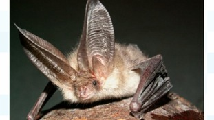 Police 'Batman' praised for saving protected species from rogue developer