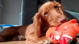 North East pet owner warns of dangers of slug pellets