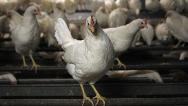 The British Poultry Council chief welcomed the announcement by the British Retail Consortium