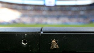 The moths had been drawn to the stadium on the eve of the match and stayed for the main event.