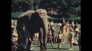 Bristol Zoo marks 180th birthday