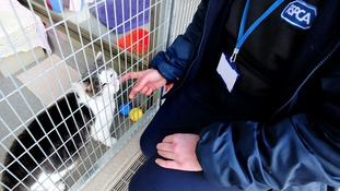 'One pet dumped every hour' says RSPCA