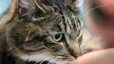 Candy the cat nearly died after eating rat poison
