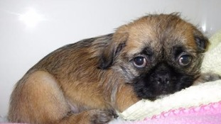 Puppy Babs who suffered jaw injury last year