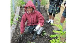 Child gardening.