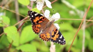 July Butterflies - Your Photos