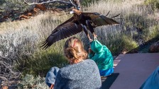 Eagle attacks boy