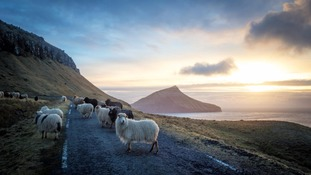 Faroe Islands use sheep cameras to create Google Street View