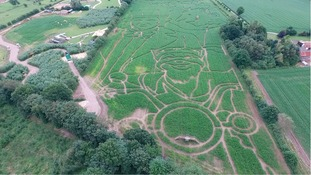 A-maze-ing! Children's story characters carved into York maize field to celebrate centenary of Roald Dahl's birth