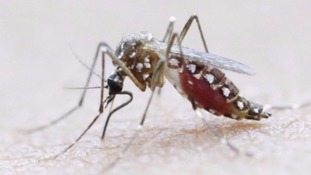 Zika is most commonly spread through mosquitoes.