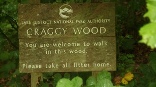 Craggy Wood