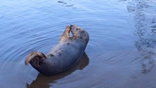 There are reports the Warrington Seal has been attacked by 'drunken fools'.