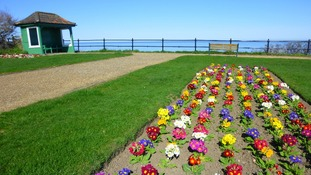 Blue skies and spring flowers on the cliff top at Mundesley, Norfolk