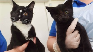 The abandoned one-eyed cats that are in need of a new home
