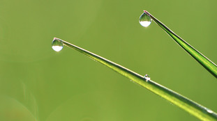 Grass with dewdrops